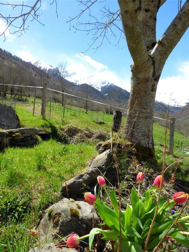 Le Begue garden in spring